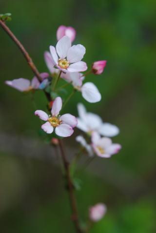 木の花_b0189573_13392855.jpg