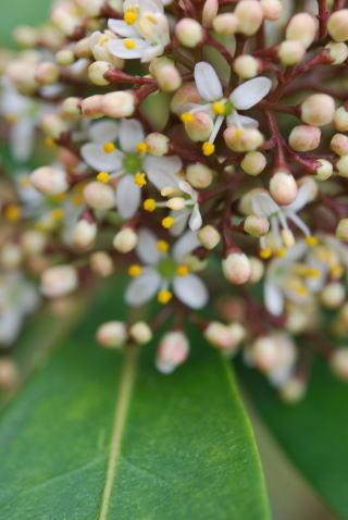 木の花_b0189573_13480132.jpg