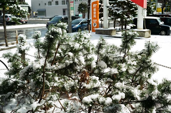 戻り雪と小二孫の通知表_c0182775_1762764.jpg