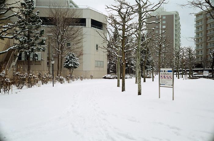 戻り雪と小二孫の通知表_c0182775_1785548.jpg