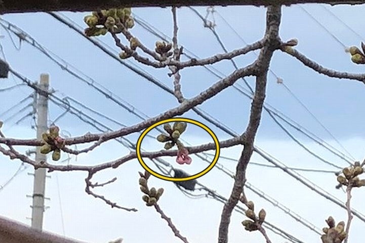 桜はまだかいな。_b0111376_16165794.jpg