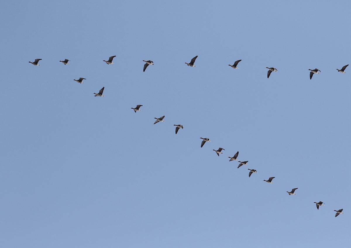 渡り鳥の季節_c0113597_10410303.jpg