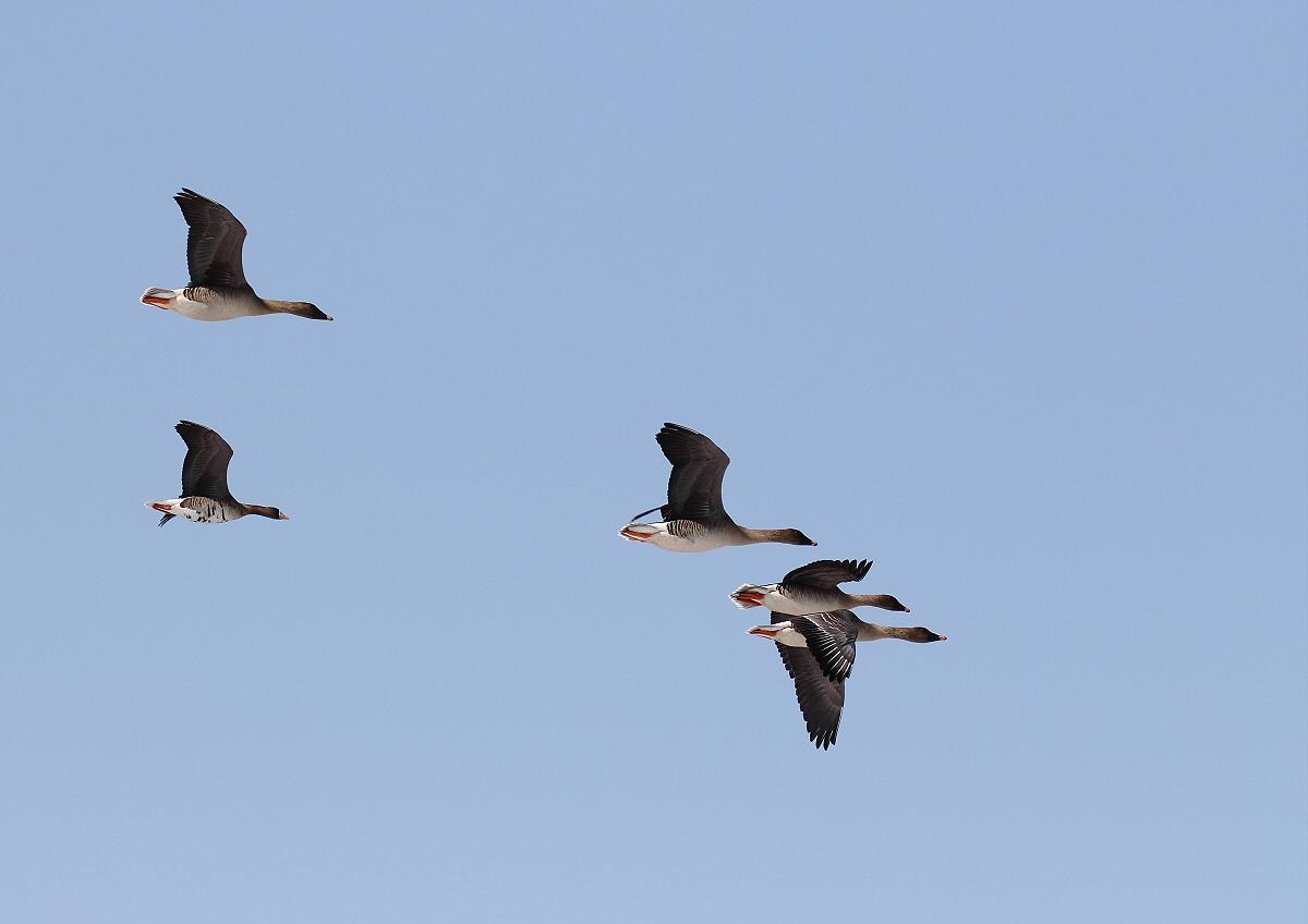 渡り鳥の季節_c0113597_10412170.jpg
