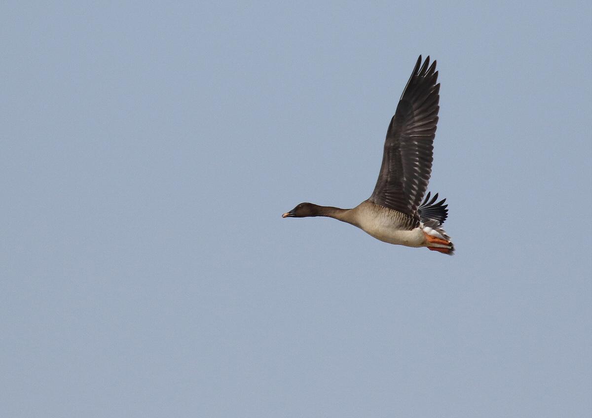 渡り鳥の季節_c0113597_10413302.jpg