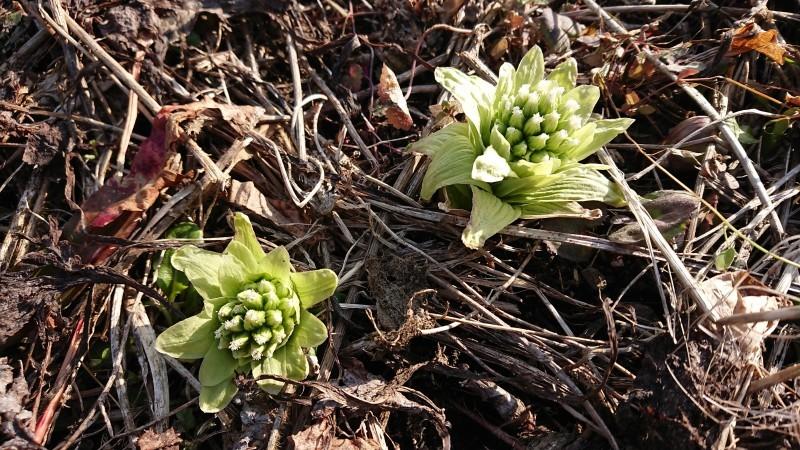 まだ降るか春の雪_c0320302_17351436.jpg