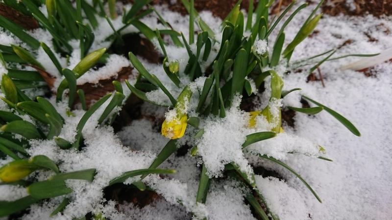 まだ降るか春の雪_c0320302_17365317.jpg