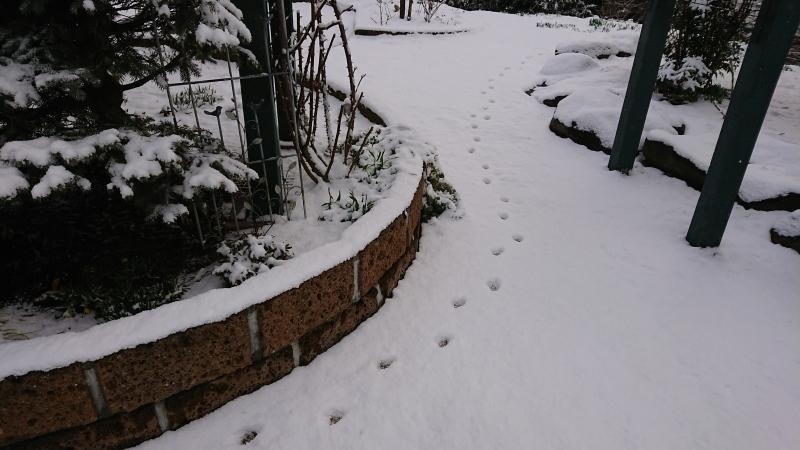 まだ降るか春の雪_c0320302_17370685.jpg