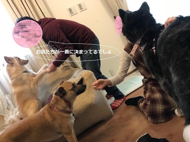 花虎ちゃん 新生活スタート!_f0242002_17482982.jpg