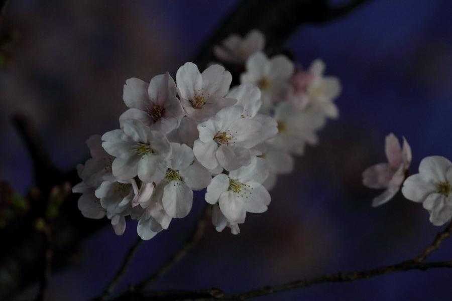 梅咲く里に白煙が舞う - 2019年早春・上越線 -_b0190710_18544402.jpg