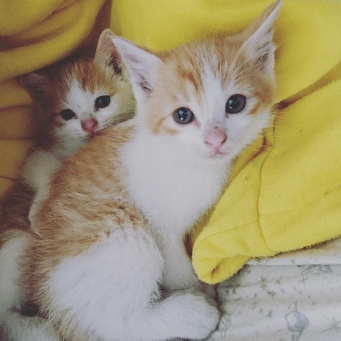 子猫…_b0235714_04180030.jpg
