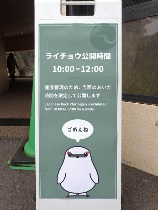 ニホンライチョウ15年ぶりに一般公開!!(上野動物園)_b0355317_22034277.jpg