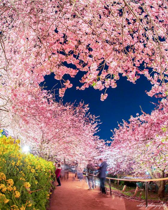 ほっとキャンペーン2019受賞者発表!『小さな春、み~つけた!』編_f0357923_15100013.jpg