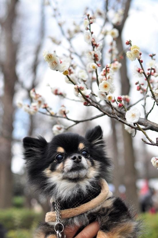 ほっとキャンペーン2019受賞者発表!『小さな春、み~つけた!』編_f0357923_16223501.jpg