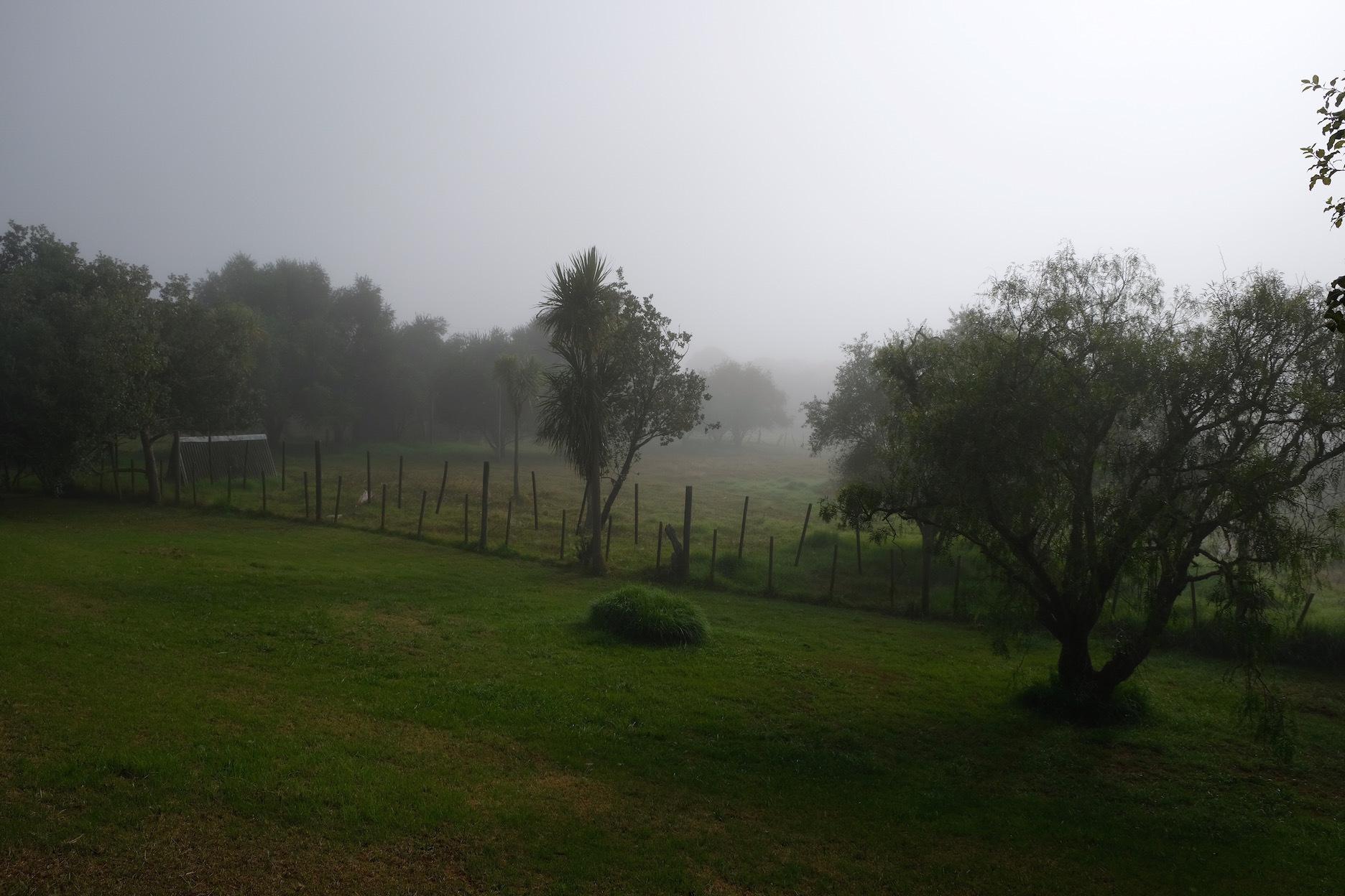 霧の朝、国の幸福度・再考/ Foggy Morning In My Garden_e0310424_16265375.jpg