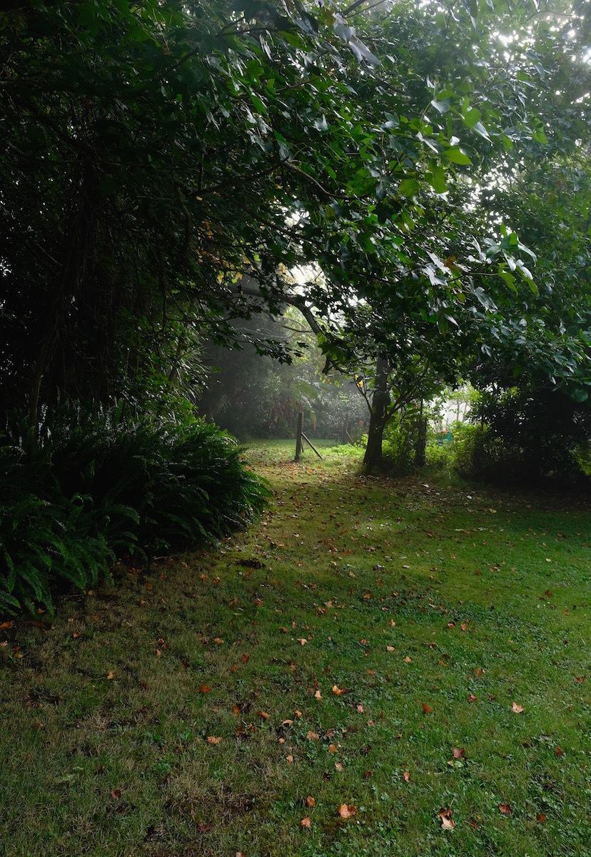霧の朝、国の幸福度・再考/ Foggy Morning In My Garden_e0310424_16273904.jpg