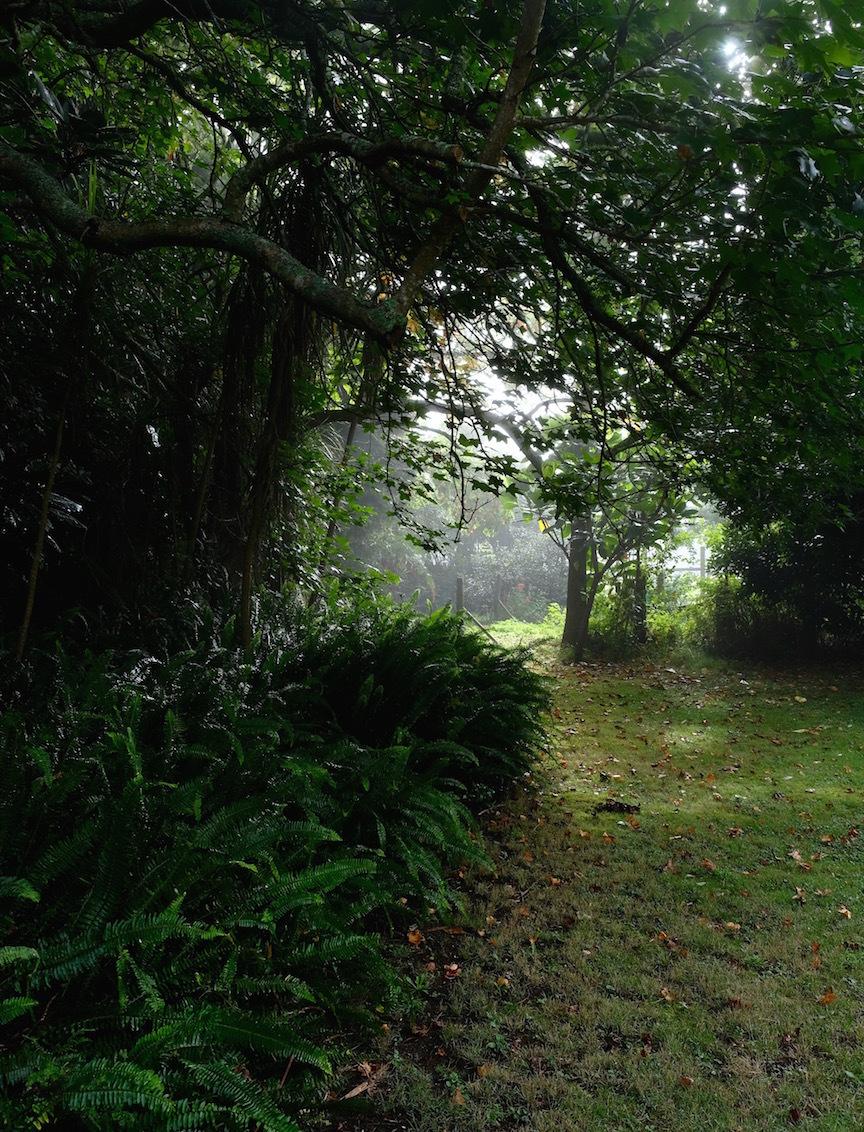 霧の朝、国の幸福度・再考/ Foggy Morning In My Garden_e0310424_16275392.jpg
