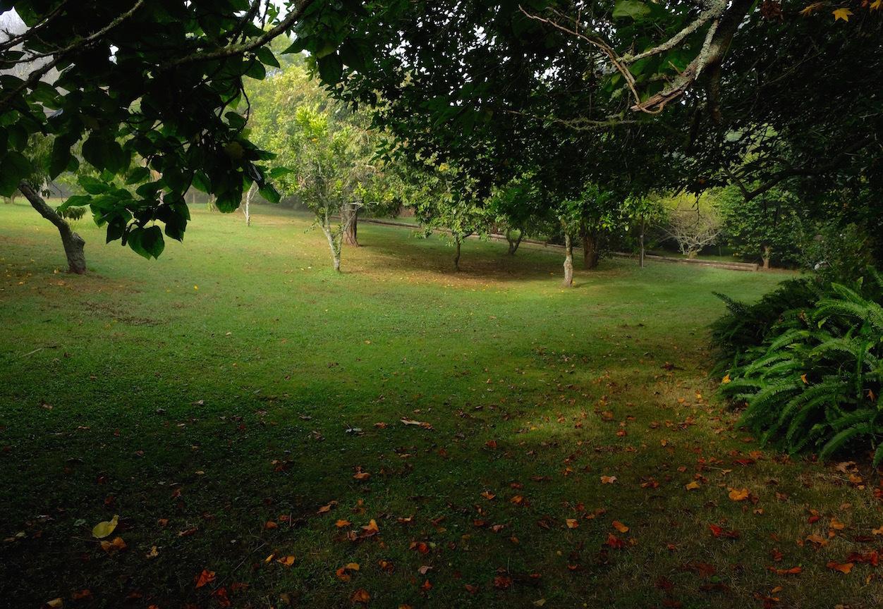 霧の朝、国の幸福度・再考/ Foggy Morning In My Garden_e0310424_16280419.jpg