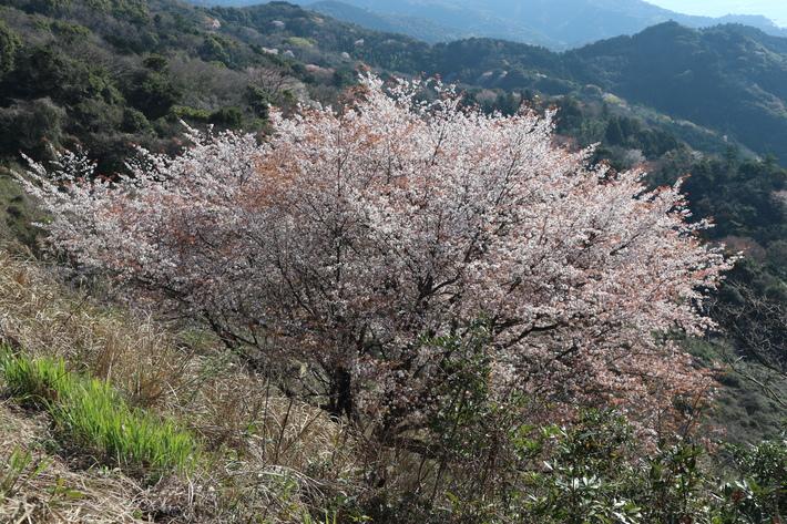 里山歩きで今季お初の春蘭を愛でる!_e0272335_160537.jpg