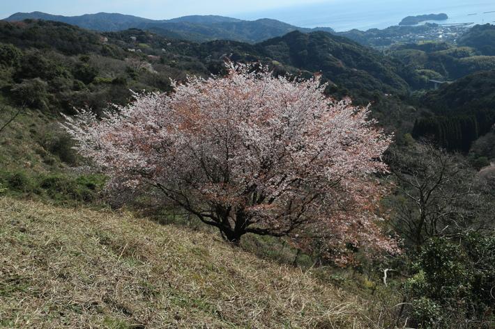 里山歩きで今季お初の春蘭を愛でる!_e0272335_1671444.jpg