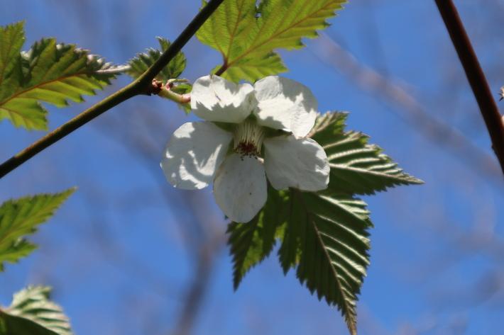 里山歩きで今季お初の春蘭を愛でる!_e0272335_17293388.jpg