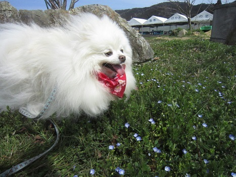 暖かな春を満喫_b0177436_11283061.jpg
