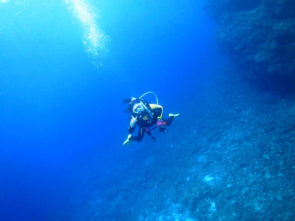 黒島にカメがいっぱい☆_a0189838_16592813.jpg