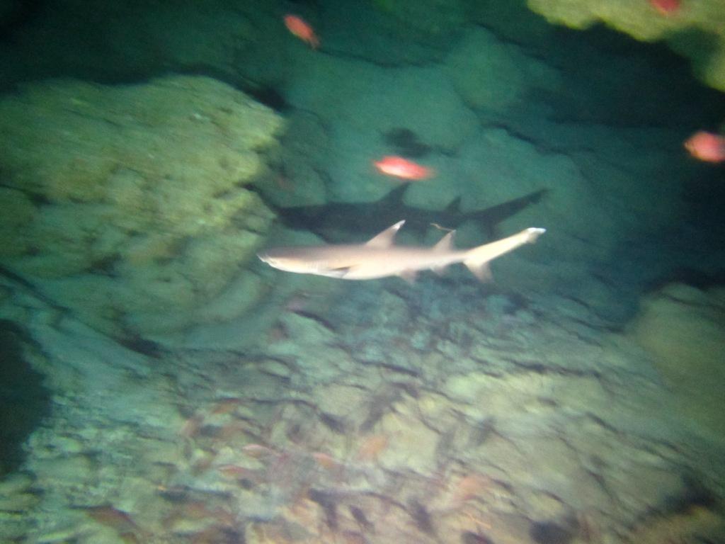 黒島にカメがいっぱい☆_a0189838_17012424.jpg