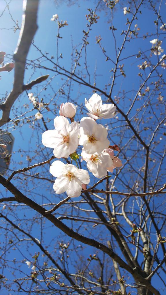 関東新富会の花見でした_d0051146_21425865.jpg