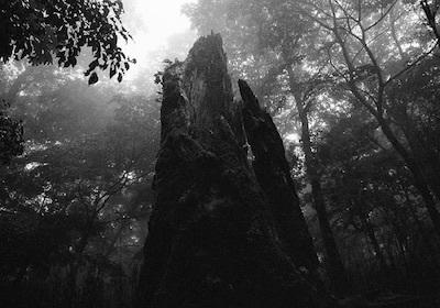 静寂は殺しのサイン/長く強い痛みとアダージョ・ソステヌートの殺人者_c0109850_00202397.jpg