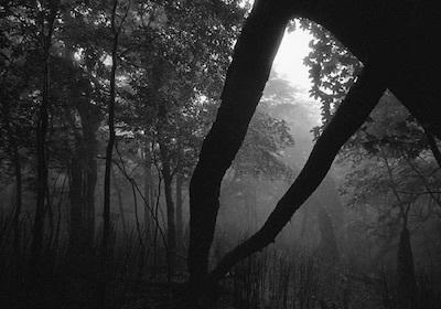 静寂は殺しのサイン/長く強い痛みとアダージョ・ソステヌートの殺人者_c0109850_00213853.jpg
