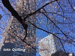 桜満開近し_a0335352_13583265.jpg