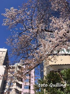 桜満開近し_a0335352_13585697.jpg