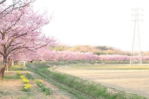 桜さいた_a0292060_12271017.jpg
