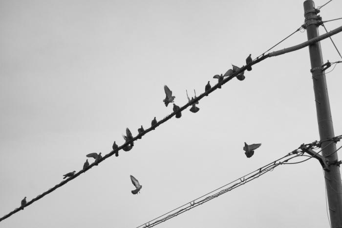 鳥のたまり場_d0349265_20301439.jpg