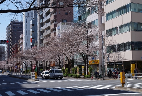 桜@明治通り_a0248481_21072409.jpg