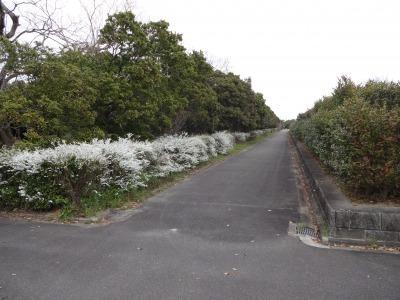 富浜緑地情報♪つくし、どんぐり、ユキヤナギが見られます!_d0338682_10280282.jpg