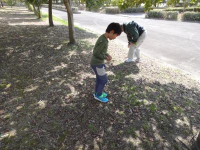 富浜緑地情報♪つくし、どんぐり、ユキヤナギが見られます!_d0338682_10300182.jpg