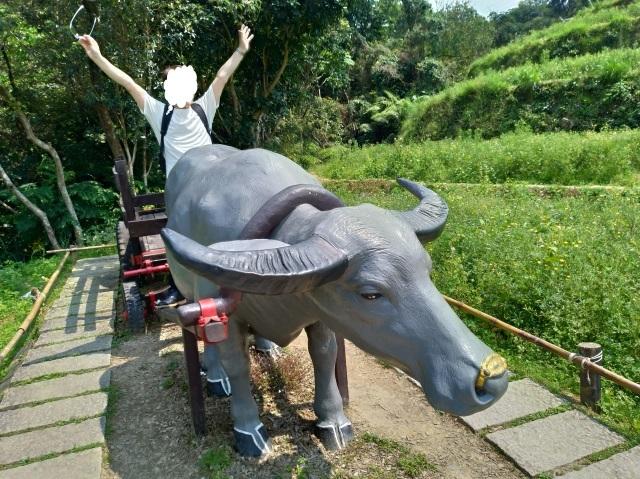 台湾旅行 (3) 猫空ロープウェイで登って樟樹歩道で茶畑を散歩する_f0100593_16483868.jpg