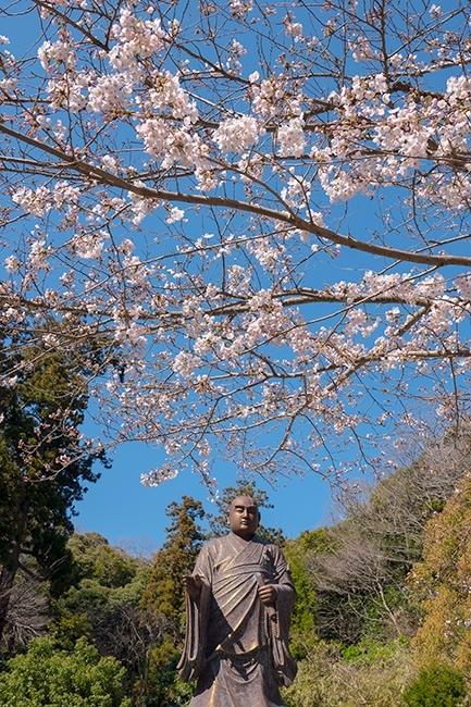 鎌倉桜散歩_b0145398_23362635.jpg