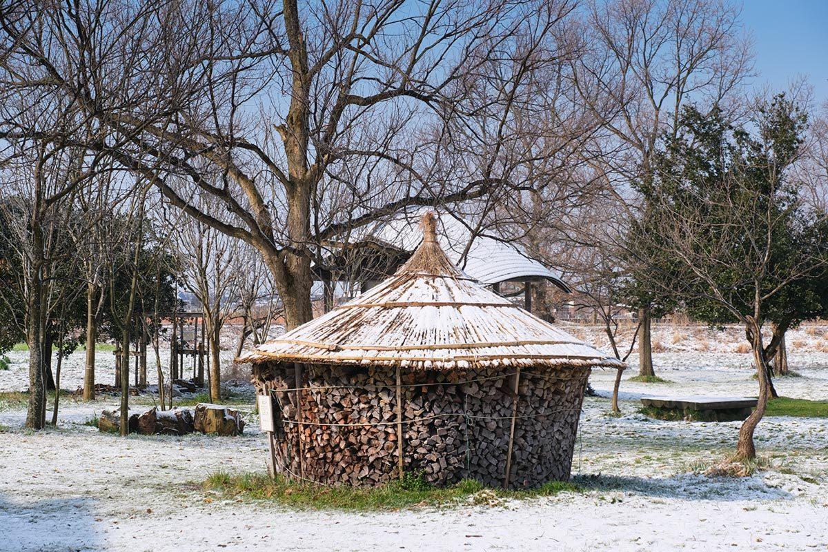 X-T30 見参 そのII 菜の花に雪が降る #FUJIX-T30_c0065410_22174953.jpg