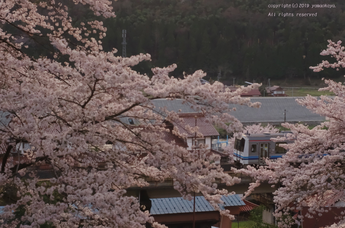 桜咲く夕刻_d0309612_00065412.jpg