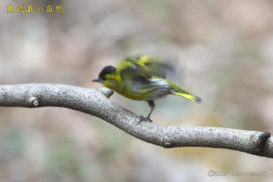 お山の冬鳥たち①_e0268015_21492436.jpg