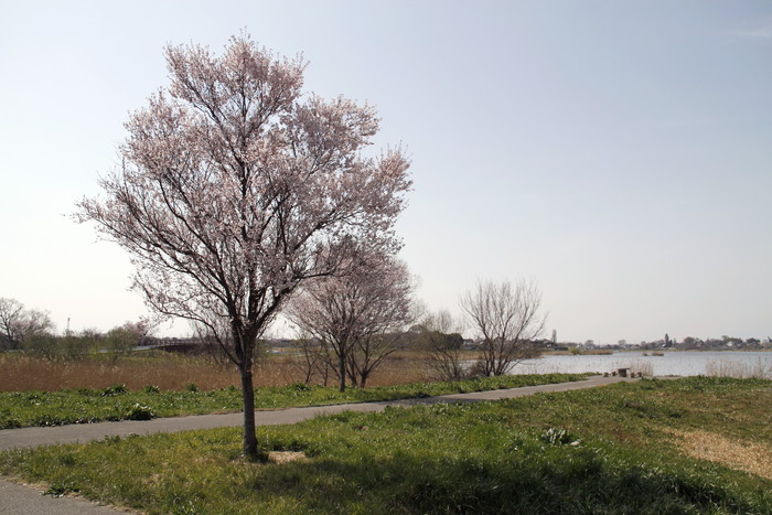MFの城沼でニュウナイスズメを今シーズン初撮り_f0239515_21491037.jpg
