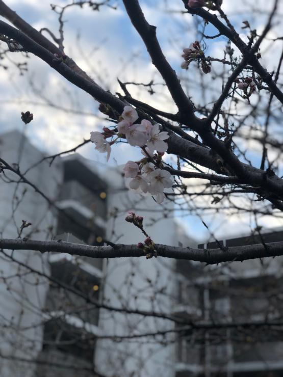 開花って言いますが(開花から4日目)_b0317723_06474234.jpg
