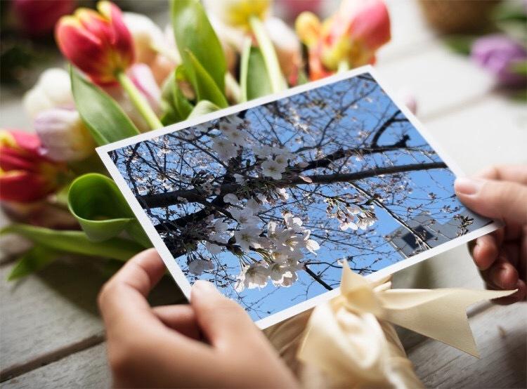 開花って言いますが(開花から4日目)_b0317723_07493338.jpeg