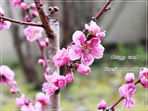 ハムカツ弁当と花桃♪_f0348032_17091409.jpg