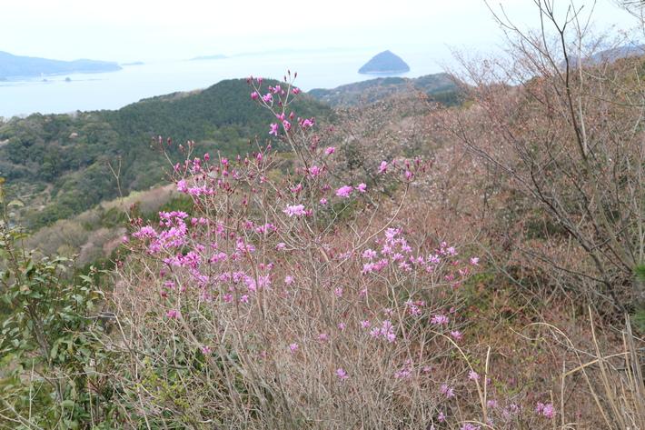 大岩の山桜&イワツツジ!_e0272335_18542723.jpg