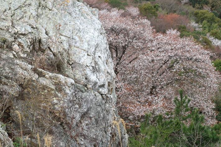 大岩の山桜&イワツツジ!_e0272335_1858038.jpg