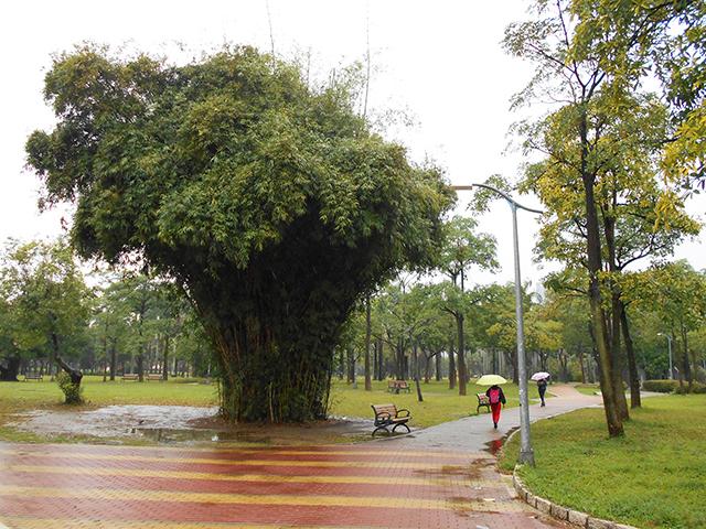 台北の旅 2日目(大安森林公園)_a0099744_20030752.jpg