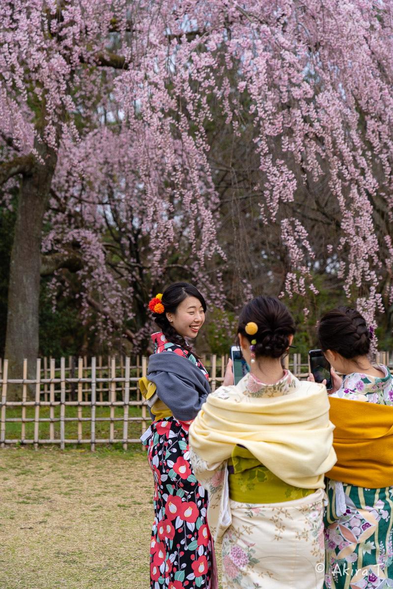 京都の桜 2019 〜2〜_f0152550_21075908.jpg